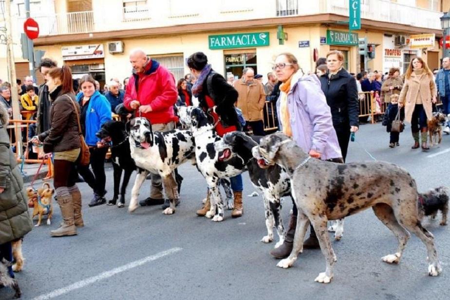 Llega el tradicional Porrat de Sant Antoni y las bendiciones de animales de la calle Sagunto