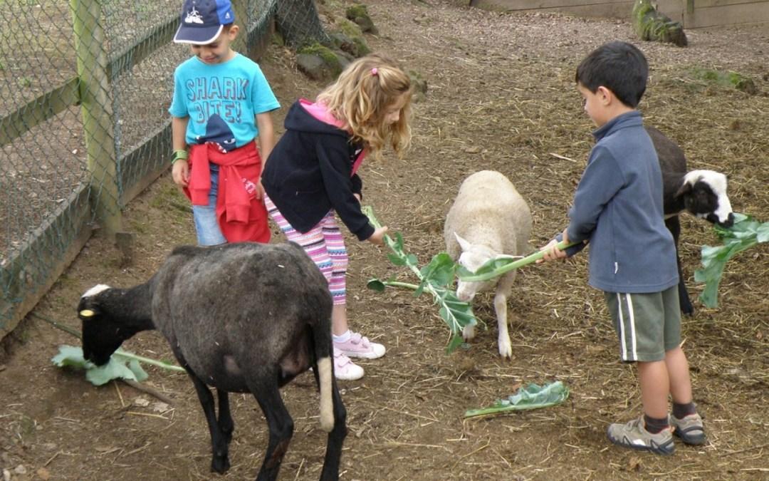 Estiu Jove 2016: actividades en verano para niños y jóvenes entre 3 y 35 años