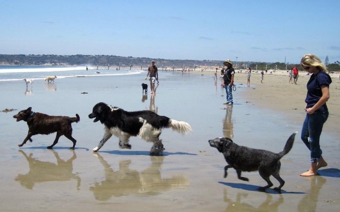 Playas para perros en la Comunidad Valenciana 2016