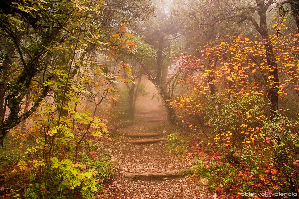 Los Bosques Y Parajes Más Bonitos De La Comunidad Valenciana