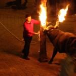 El bou embolat y el bou en corda seguirán prohibidos en Valencia y sus pedanías
