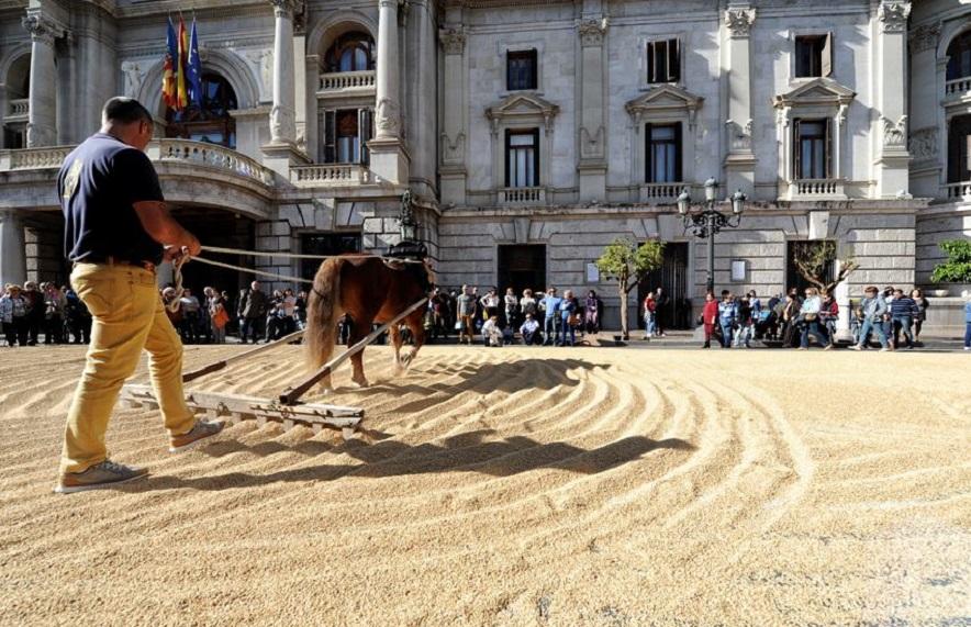 TastArròs, la fiesta del arroz valenciano, vuelve a la plaza del ayuntamiento de Valencia