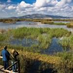 Senderismo entre humedales: la Marjal dels Moros, un joya entre Puçol y Sagunto