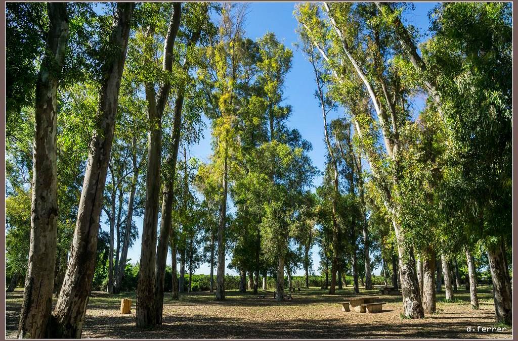 La Xopera, el espacio natural de Algemesí que conserva el único bosque de ribera de la región