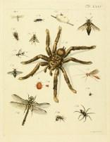 Planche montrant divers invertébrés tirée de Johann Jacob Römer (1789). Genera insectorum Linnaei et Fabricii iconibus illustrata, Henri Steiner (Winterthur) : viii + 86 p. + 27 pl.
