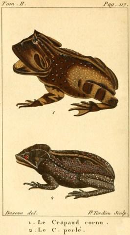 Planche de Sève tirée de Charles Sigisbert Sonnini et Pierre-André Latreille (1802). Histoire naturelle des reptiles : avec figures dessinées d'après nature. Vol. II, Déterville (Paris)