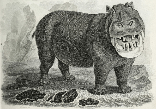 Tapir et hippopotame, planche tirée d'Abraham Rees (1820). The Cyclopaedia; Or, Universal Dictionary of Arts, Sciences, and Literature. Plates. Vol. V. Natural History, Longman, Hurst, Rees, Orme, and Brown (Londres)