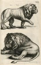 Jan Jonston (1657). Historiae naturalis de quadrupedibus libri, cum aeneis figuris, J. J. fil. Schipper (Amsterdam)