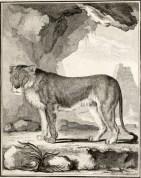 Buffon (1766). Histoire naturelle, générale et particulière, avec la description du cabinet du roi. Tome neuvième, Imprimerie royale (Paris)