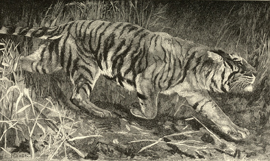 Illustration de H. Dixon tirée de Samuel White Baker (1890). Wild Beasts and their Ways: Reminiscences of Europe, Asia, Africa, and America, Macmillan and Co., Limited (Londres)