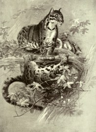 D'après un dessin de Wolf, illustration extraite d'Henry Scherren (1905). The Zoological Society of London: A Sketch of Its Foundation and Development, and the Story of Its Farm, Museum, Gardens, Menagerie and Library, Cassell and company Ltd (Londres)
