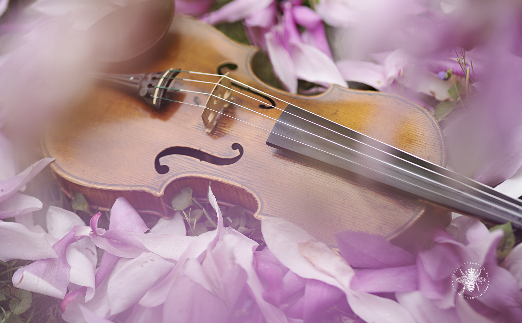 Album cover for Irish singer. A violin is surrounded by purple flowers.