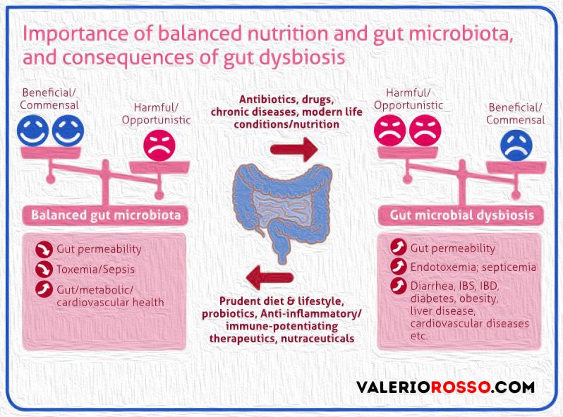 microbiota-disequilibrio