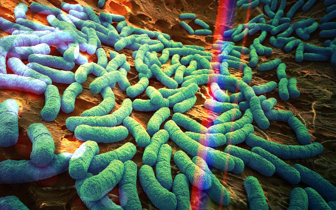 La Guida Definitiva al Microbioma Umano