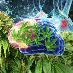 Luci ed ombre dell'utilizzo terapeutico della cannabis in Psichiatria
