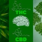 cannabis-medica-in-psichiatria