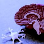 basi-biologiche-della-mente