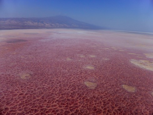 Lake Natron Blood Lake Tanzania