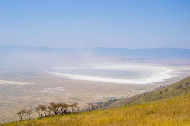 Zebras Ngorongoro Crater