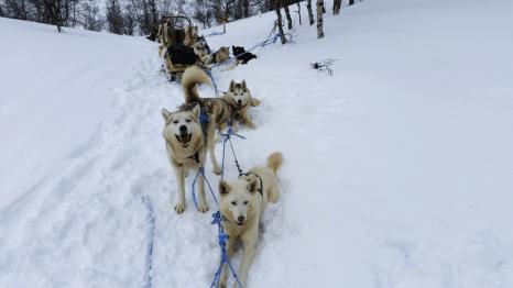 Husky Sledge Lapland