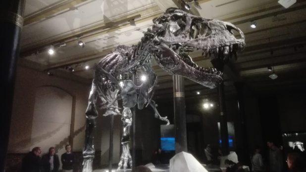 tristan-trex-museo