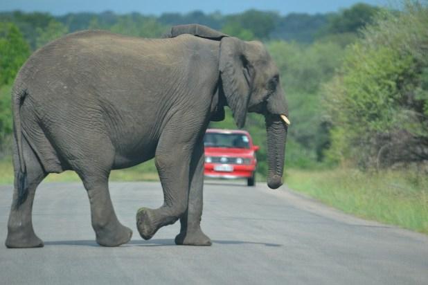 safari sud africa