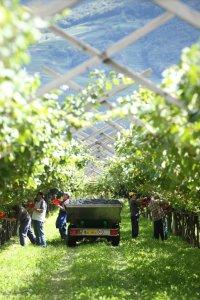 vino_Trentino_degustazioni
