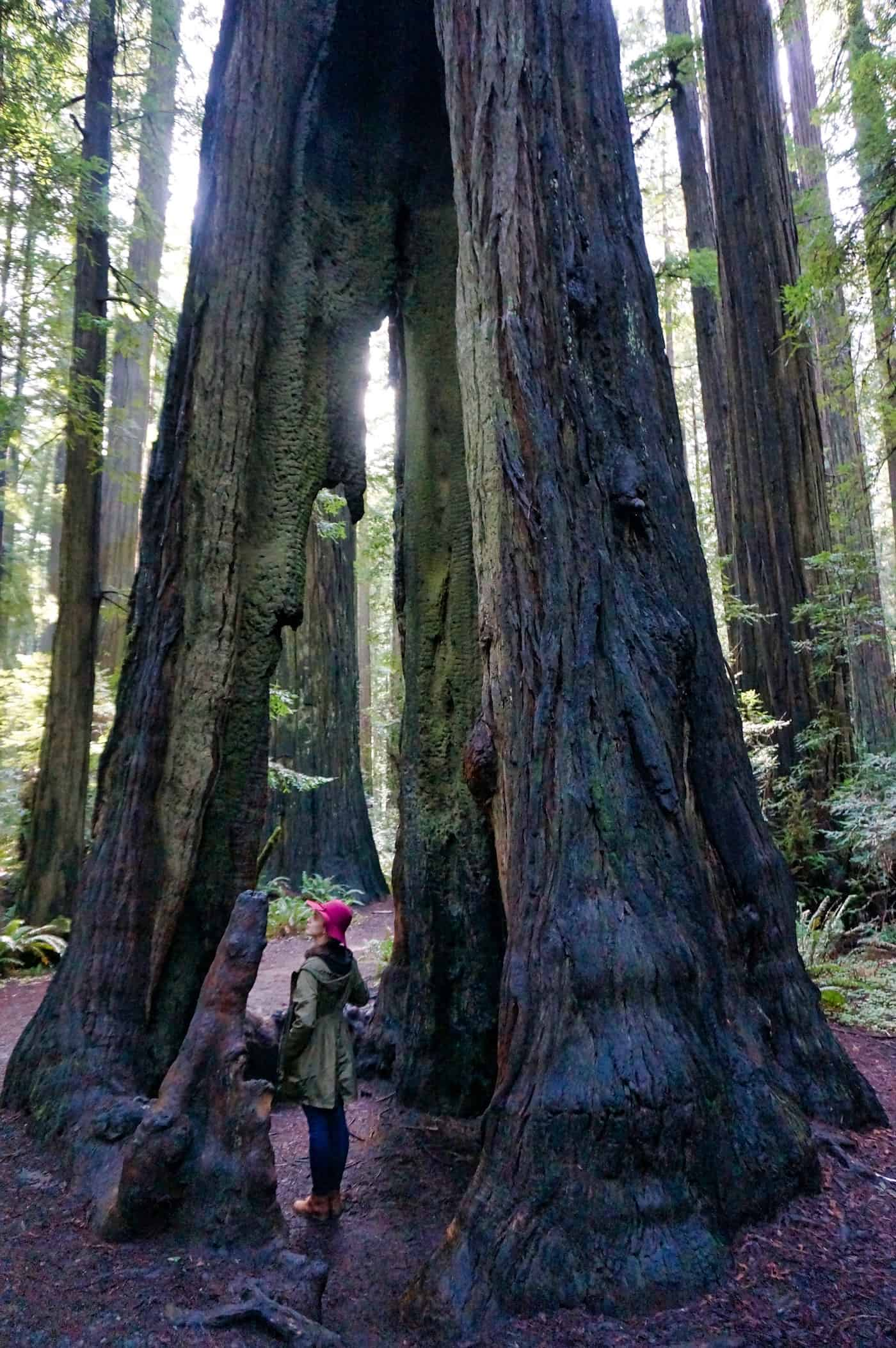 California Redwoods - Valerie Standing in Tree Heart