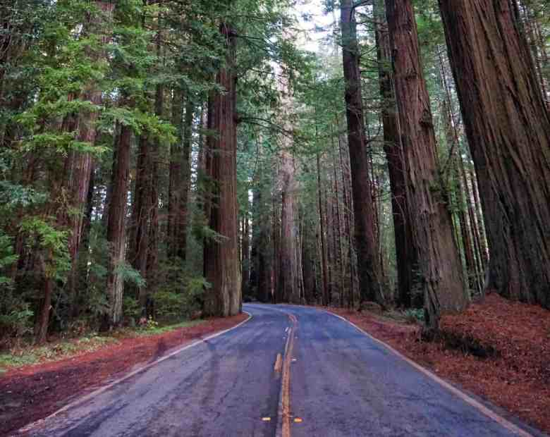 California Redwoods - Highway 101