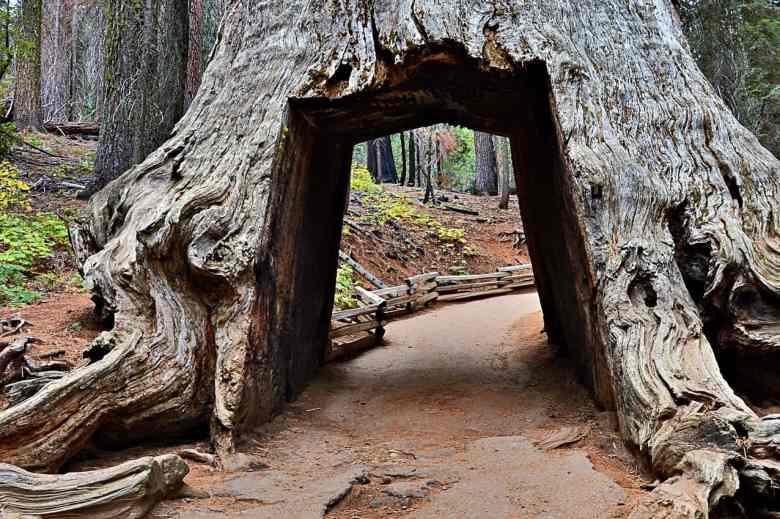 3 Days in Yosemite - Tuolumne Grove