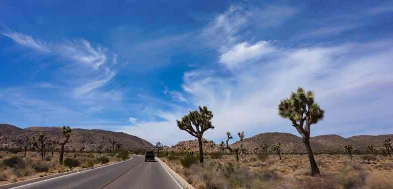 Joshua Tree Weekend Itinerary - Driving past Joshua Trees
