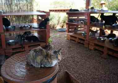 UnCruise Hawaii - Day 3 - Lanai Cat Sanctuary