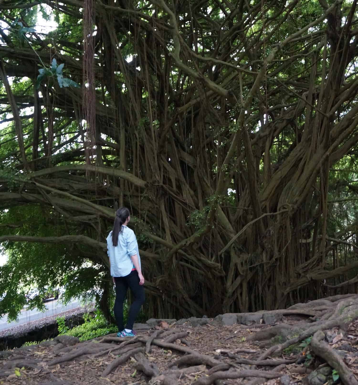 3 Days on Hawaii - Banyan Tree