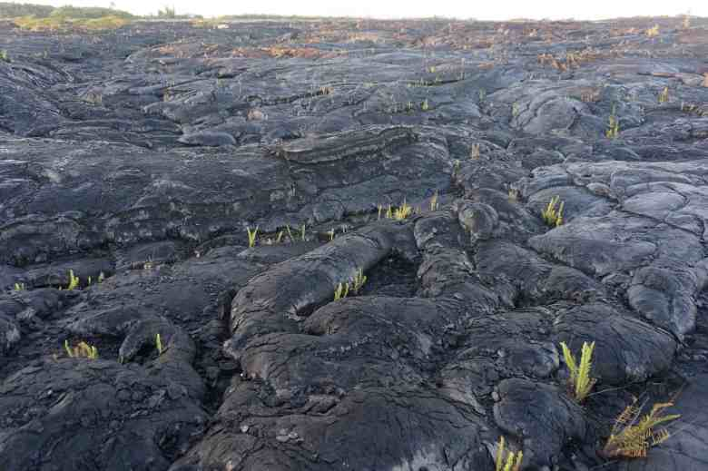 3 Days on Hawaii - Lava Floe