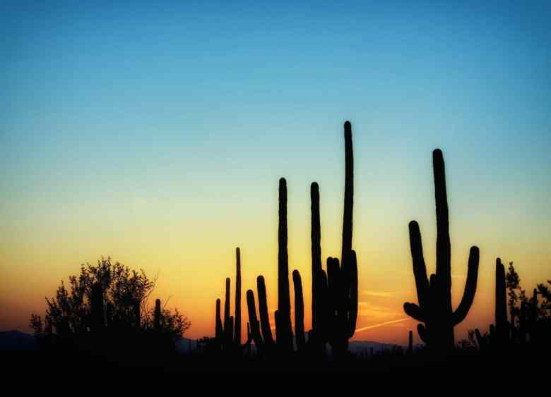 Best National Parks - Saguaros National Park