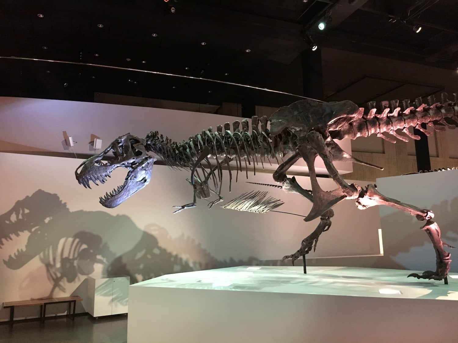 What to Do in Houston: Museum of Natural Science