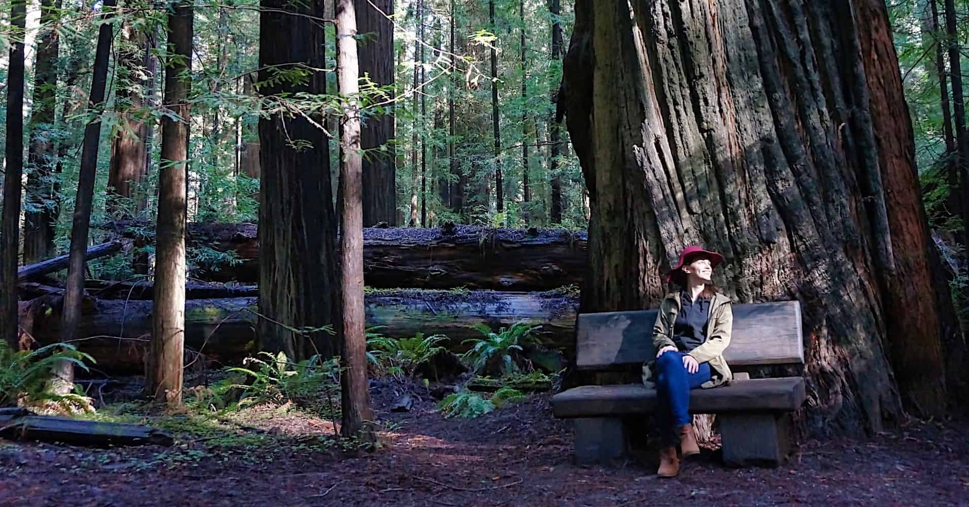 Sensational The 3 Best Places To See The Redwoods Near San Francisco Cjindustries Chair Design For Home Cjindustriesco