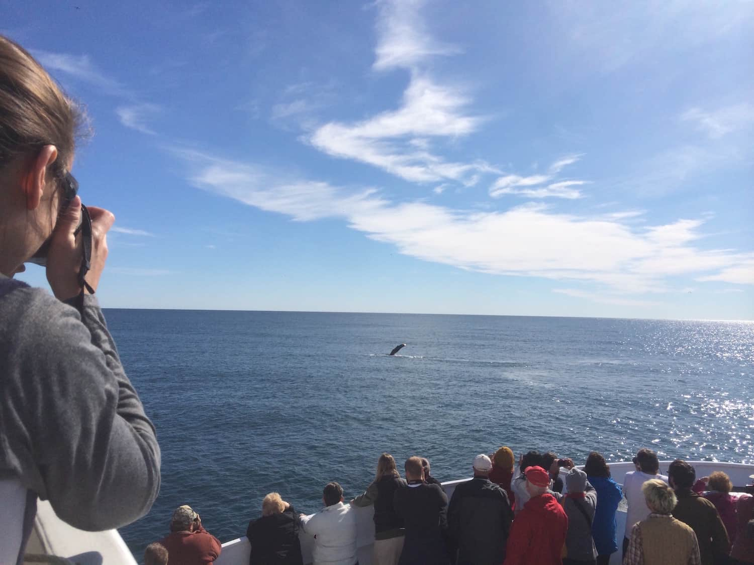 Major Marine Tours - Whale Watching