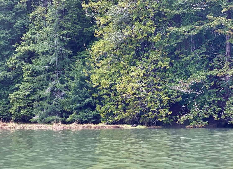 Mendocino Weekend - Canoeing