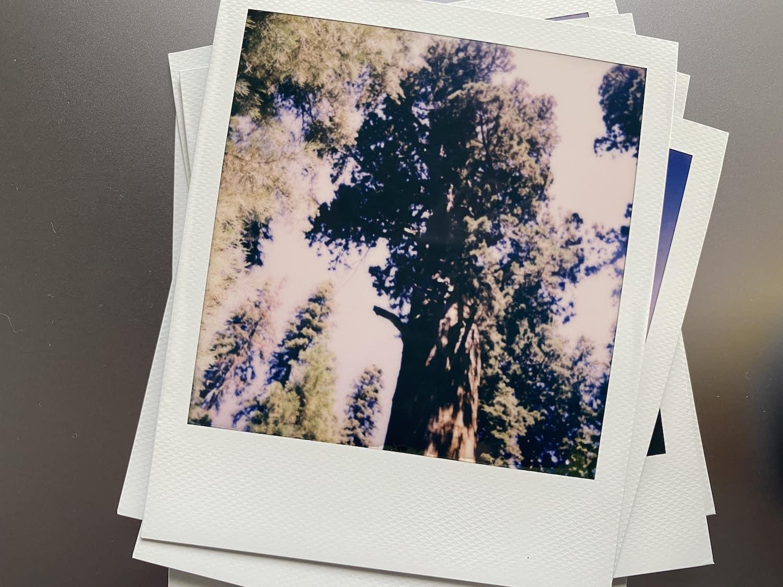 Polaroid Now: General Sherman Tree
