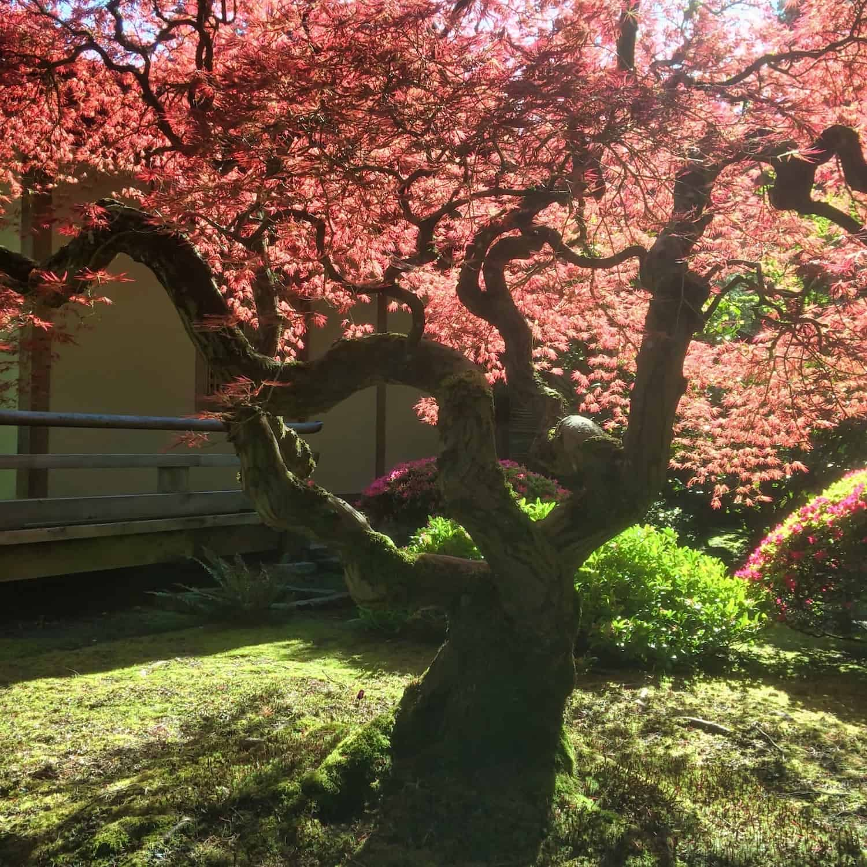 Portland Weekend Trip - Japanese Zen Garden