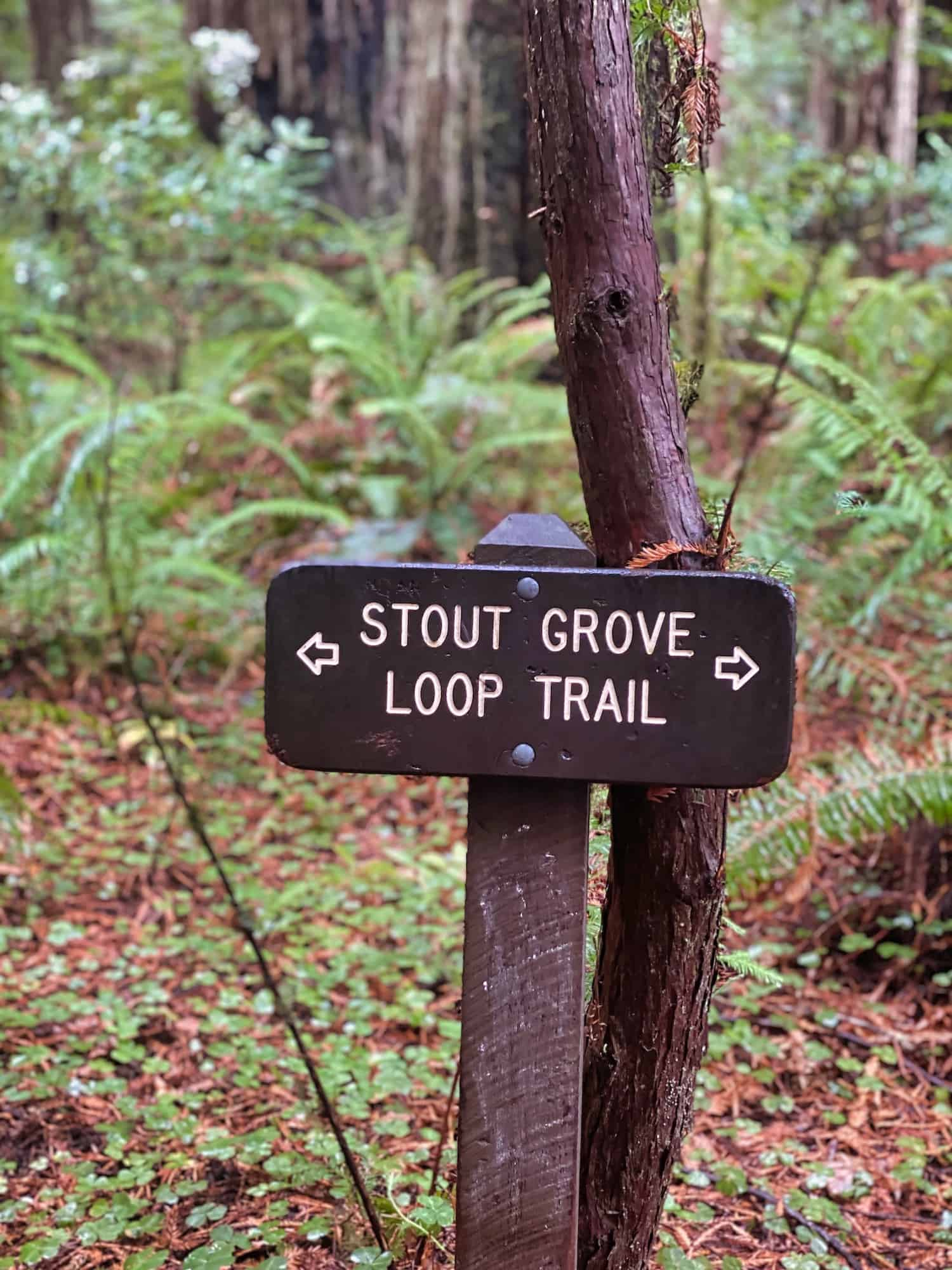 Things to Do in Crescent City - Stout Grove