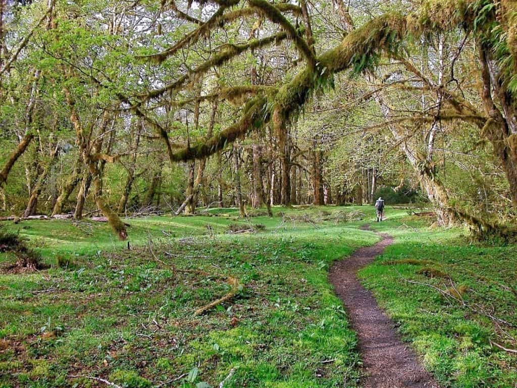 Pacific Coast Highway - Washington - Hoh Rainforest
