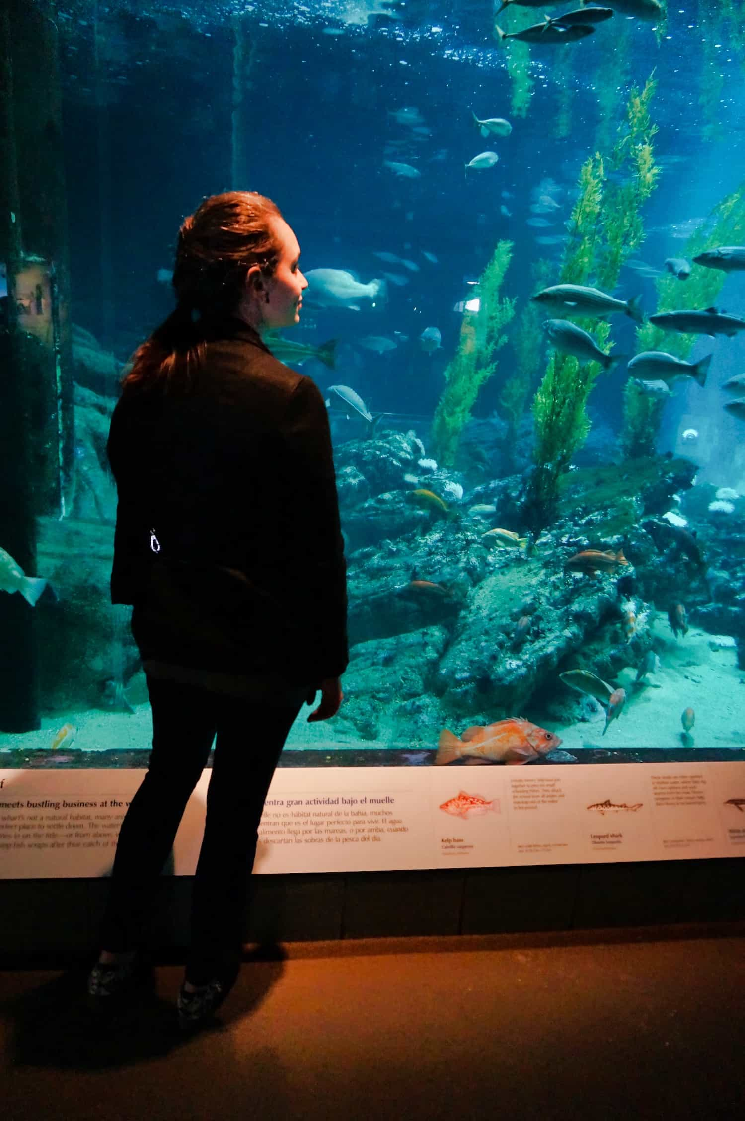Standing at the Monterey Bay Aquarium