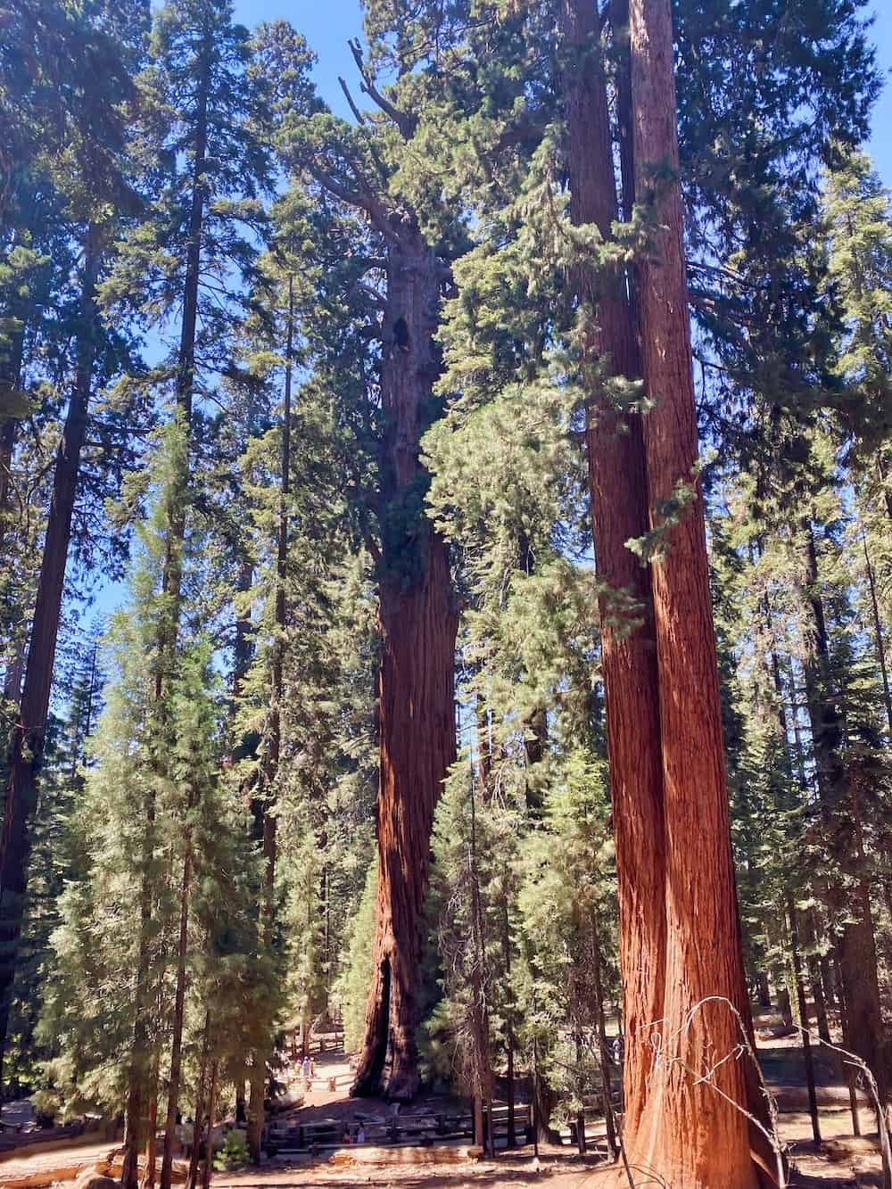 One Day in Sequoia National Park