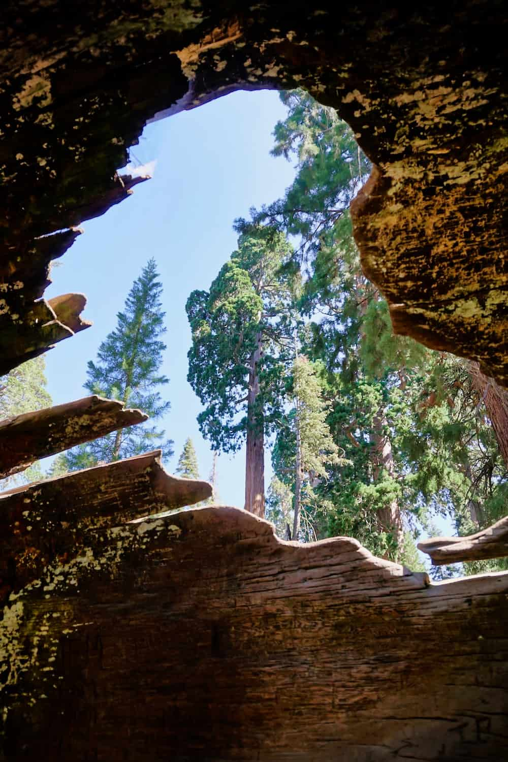 One Day in Sequoia National Park - Tree Grove