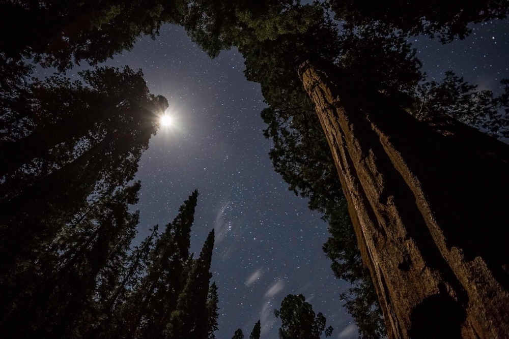 Stargazing in Sequoia National Park - Moonlight