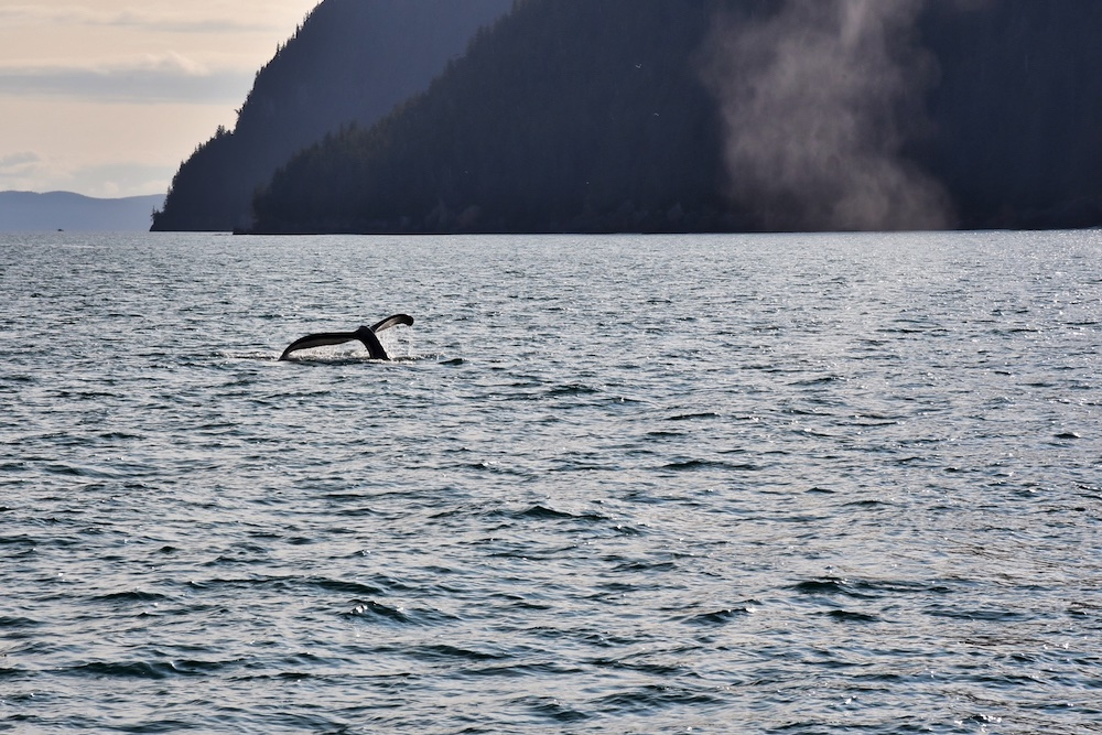 John Hall's Alaska Review - Day 1 - Cruise to Valdez Whale Watching