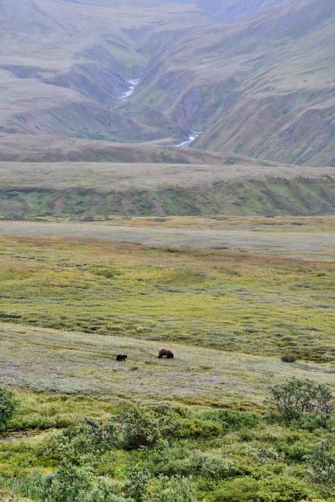 John Hall's Alaska Review - Day 4 - Denali Park Drive Grizzlies