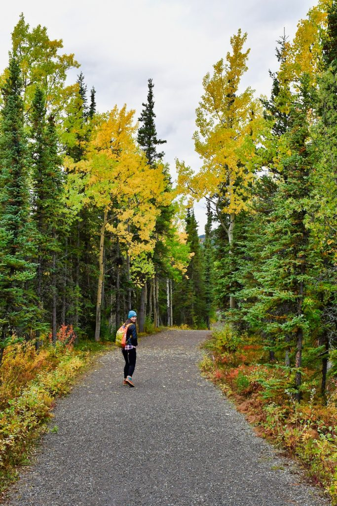 Denali National Park Itinerary - Hiking in the Woods